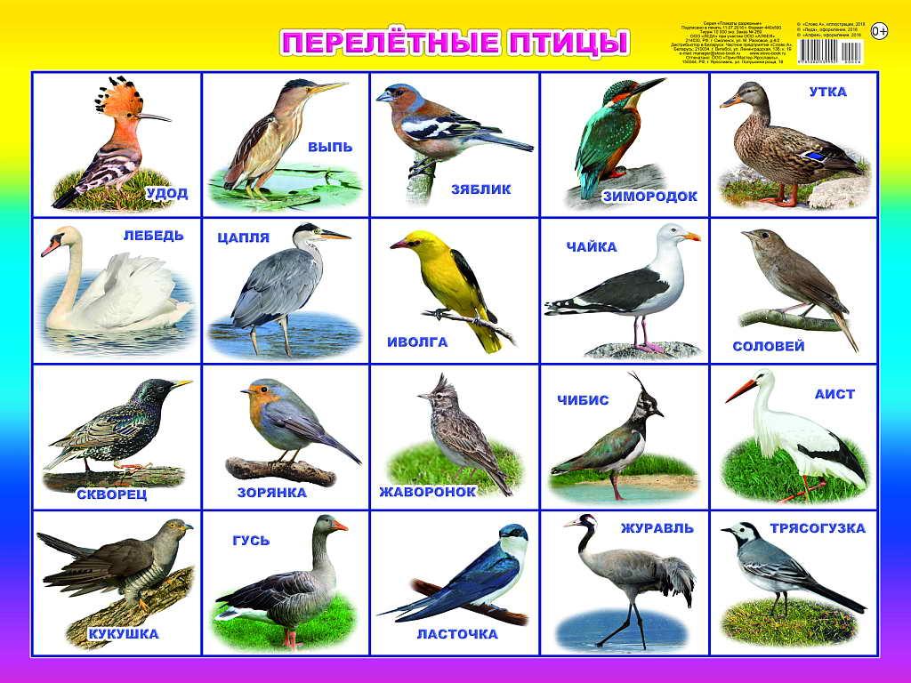значит как как найти название птицы по картинке ресторане хватало интеллигентных
