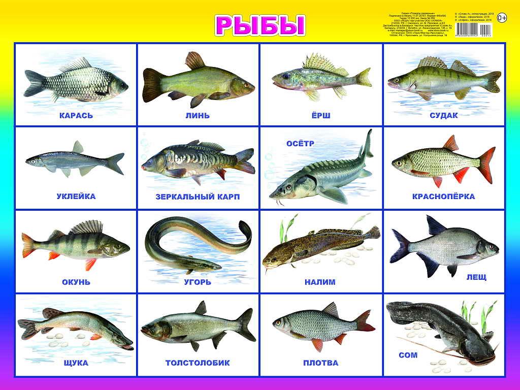 русские рыбы картинки с названиями ремонт гостиной