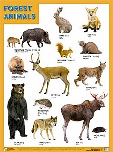 плакат - forest animals. лесные обитатели 500*690 864-6 /мозаика-синтез